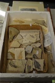 Sale 8563T - Lot 2400 - Box of Fossils with Identifying Text