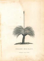 Sale 9037A - Lot 5030 - Artist Unknown - Yellow Gum Plant, 1789 copper engraving