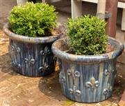 Sale 8871H - Lot 30 - A pair of short French style glazed ceramic planters with blue finish planted with buxus, height 41, diameter 58cm (height does not...