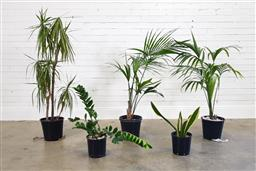 Sale 9174 - Lot 1166 - Collection of indoor plants (h:130cm)