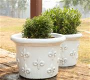 Sale 8871H - Lot 33 - A pair of short French style white glazed ceramic planters planted with buxus, height 41, diameter 58cm (height does not include plant)
