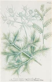 Sale 8773A - Lot 5013 - Collection of (4) Botanical Engravings