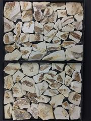Sale 8567 - Lot 773 - Identified Fossils, Wyoming