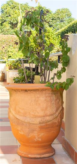 Sale 9165H - Lot 206 - A terracotta Anduze style jardiniere with jade plant. height 70cm