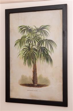 Sale 9150H - Lot 179 - A pair of prints in black frames depicting palm trees with latin caption, frame size 66cm x 44cm