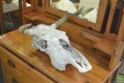 Sale 8331 - Lot 1369 - Bull Skull with Horns