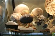 Sale 8217 - Lot 148 - Shells, Emu Egg with Various Other Marine Life