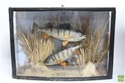 Sale 8494 - Lot 99 - Framed Diorama of Fish