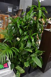 Sale 8054 - Lot 1084 - Collection of Plants - Excludes Planters