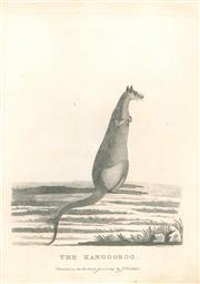 Sale 9037A - Lot 5033 - Artist Unknown - The Kangooroo, 1789 copper engraving