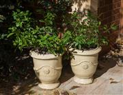 Sale 7981B - Lot 1 - Pair of Potted Plants