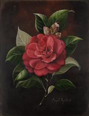 Sale 8907 - Lot 509 - Margaret Rymill (1913 - 2004) - Red Rose Study, 1968 29 x 22.5 cm