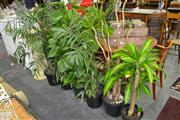 Sale 8117 - Lot 992 - Collection of Indoor Plants