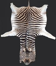 Sale 8586A - Lot 100 - A zebra hide, in good condition, 315 x 206cm