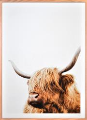 Sale 8342A - Lot 33 - Artist Unknown - The Highland Bull