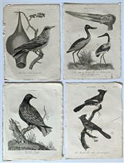 Sale 8808A - Lot 5019 - Group of (4) Engravings of Birds - Oriolus, Columba, Mycteria, Muscicapa (from Encyclopaedia Londinensis, 1818) approximately 28 x 2...
