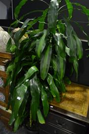 Sale 8058 - Lot 1007 - Collection of Indoor Plants