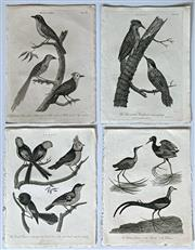 Sale 8808A - Lot 5020 - Group of (4) Engravings of Birds - Parus, Parra, Muscicapa, Picus (from Encyclopaedia Londinensis, 1818) approximately 28 x 21cm, ea...