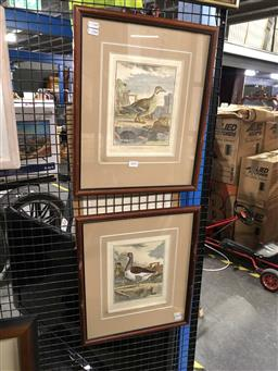 Sale 9163 - Lot 2050 - A pair of French hand coloured engravings of Ducks, frame: 44 x 37 cm each