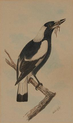 Sale 9178 - Lot 576 - NEVILLE CAYLEY SNR (1853 - 1903) Magpie with Lizard watercolour 41 x 24.5 cm (frame: 61 x 44 x 3 cm) signed lower right