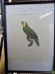 Sale 8563T - Lot 2196 - Framed Lithograph Blue Capped Amazon Parrot from Francois Levaillant Second Volume 1980