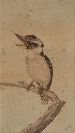 Sale 9178 - Lot 578 - NEVILLE CAYLEY SNR (1853 - 1903) Kookaburra, 1897 watercolour (A.F) 46 x 26 cm (frame: 66 x 46 x 3 cm) signed and dated lower right