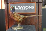 Sale 8217 - Lot 130 - Taxidermy Pheasant Figure