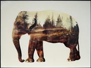 Sale 8961 - Lot 2058 - Artist Unknown Elephant photomontage on lucite, 60 x 80cm, unsigned