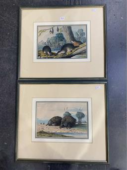 Sale 9176 - Lot 2016 - A fine pair of C19th handcoloured copper engravings of Platypus and Echidnae, printed 1860, frames: 41 x 48cm, each