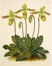 Sale 8558 - Lot 560 - John Nugent Fitch (1840 - 1927) (24 plates) - Orchids (from the Orchid Album) 30.5 x 24cm, each