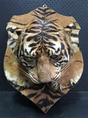 Sale 8250B - Lot 1609 - Bengal Tiger Head with Claws, trophy mount