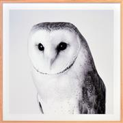 Sale 8342A - Lot 146 - Artist Unknown - The Barn Owl