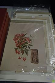 Sale 8578T - Lot 2057 - A quantity of (7) Early Botanical Coloured Lithographs, 51x 38cm, each (unframed)