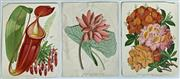 Sale 8894A - Lot 5028 - 3 Floral engravings, each various sizes (AF) (unframed)