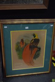 Sale 8569 - Lot 2076 - After John Gould (2 Works) - Birds of Paradise 63 x 53.5cm, each (frame size)