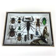 Sale 8871 - Lot 507 - Collection of Insects incl. Scorpions & Beetles