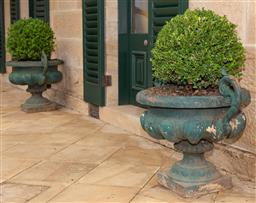 Sale 9190W - Lot 11 - A pair of antique cast iron urns with planted buxus. Height 66 x width 90 x depth 62cm