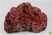 Sale 8505 - Lot 31 - Brain/Sponge Coral Together with Large Branching Example