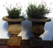 Sale 8256A - Lot 19 - A pair of cast stone garden urns planted with lavender. Size: Ht: 50 cm