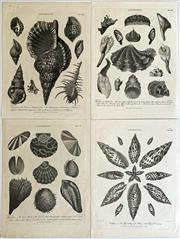 Sale 8859A - Lot 5007 - Group of Four Antique Concholgy Engravings, published 1802 - 1803 by J Wilkes - 27.5 x 20.5cm, each