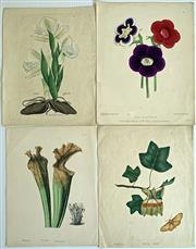 Sale 8859A - Lot 5008 - Group of Four Antique Botanical Engravings - 28.5 x 22cm, each