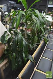 Sale 8289 - Lot 1044 - Collection of Indoor Plants