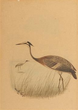 Sale 9100 - Lot 595 - Neville Cayley (1853 - 1903) - Two Herons, 1901 15.5 x 10cm (sheet) (frame: 62 x 26 x 1 cm)