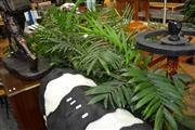 Sale 8117 - Lot 946 - Collection of Indoor Plants