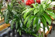 Sale 8117 - Lot 957 - Collection of Indoor Plants