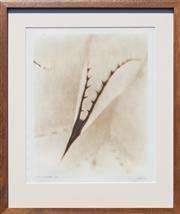 Sale 8746 - Lot 1013 - Tom Mcghee (?) - Agave Aurea & Agave Flexispina (2) Signed indistinctly, some details verso, each edition 3/25
