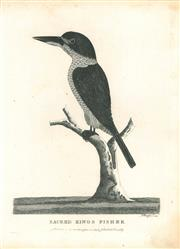 Sale 9037A - Lot 5010 - Peter Mazell (1733 - 1808) - Sacred Kings Fisher (Sacred Kingfisher)1789 copper engraving