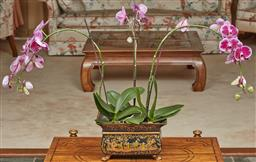 Sale 9097H - Lot 53 - An orchid planted in a jardiniere in a chinoiserie motif to the ebonised timber jardiniere raised on gilt and paw feet, Height 19cm...