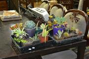 Sale 8124 - Lot 1068 - Trays of Succulents x 2