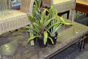 Sale 8124 - Lot 1049 - Collection of Potted Plants